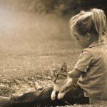 Familienkatze gesucht? 4 Tipps, um eine Familienkatze zu finden