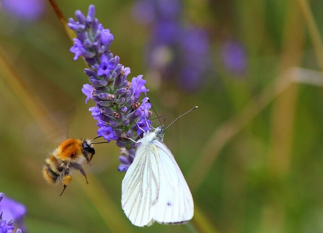 Bienen und Schmetterlinge