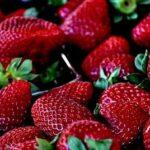 Tipps für den Garten: Wunderbare Erdbeerzeit