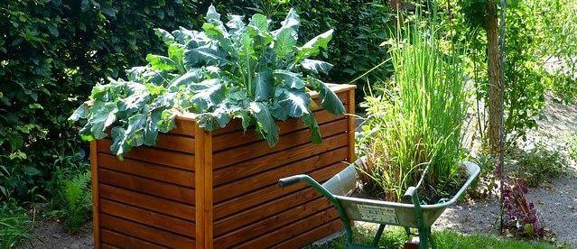 Hochbeet selber bauen: Foto eines Hochbeetes im Garten.
