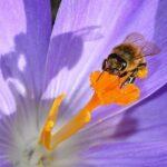 Die 10 besten Insektenhotels für deinen Garten