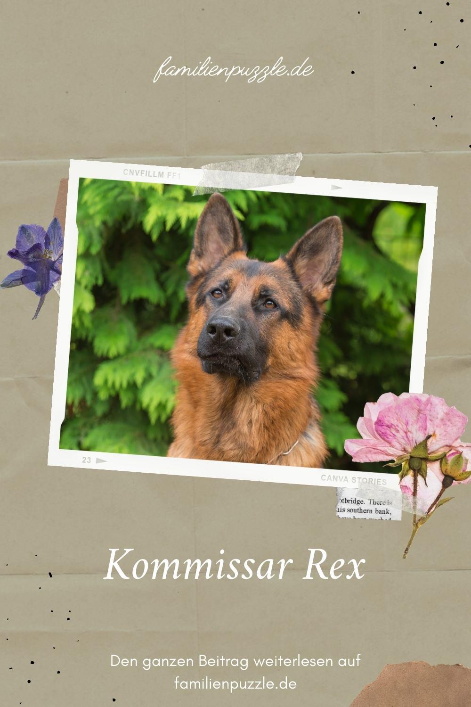 Foto eines Deutschen Schäferhundes.